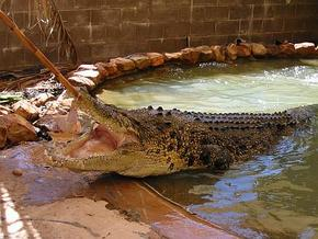 Wyndham Zoological Gardens and Crocodile Park - Accommodation Broome
