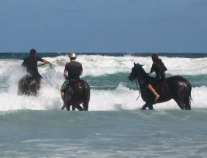 Pegasus Park Equestrian Centre - Accommodation Broome