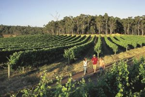 Margaret River Caves Wine and Cape Leeuwin Lighthouse Tour from Perth - Accommodation Broome