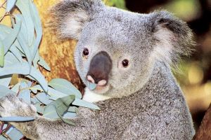 Perth Zoo General Entry Ticket and Sightseeing Cruise - Accommodation Broome
